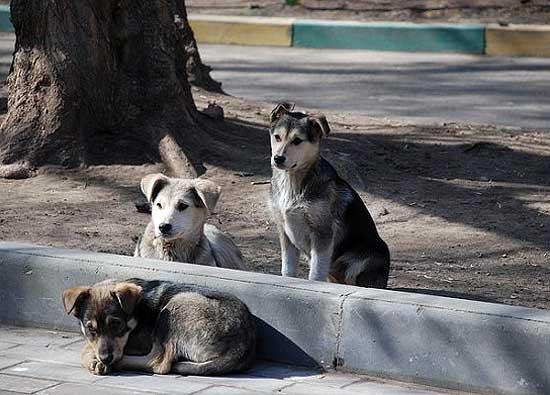 Impulsan registro de hogares de tránsito para perros callejeros