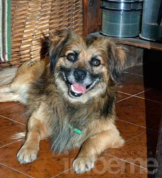 Perro encontrado en el Parque Mitre