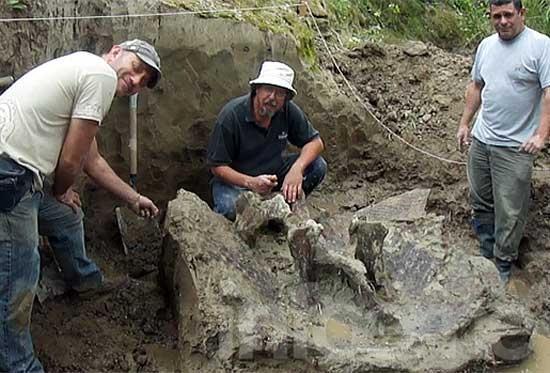 Hallan por primera vez en la zona, restos de un Gliptodonte