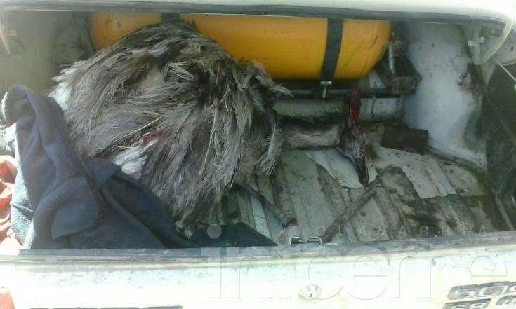 Cazadores de avestruz en Recalde
