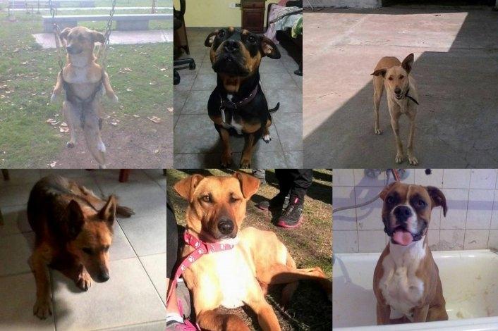 Dos perras perdidas y cuatro para adoptar