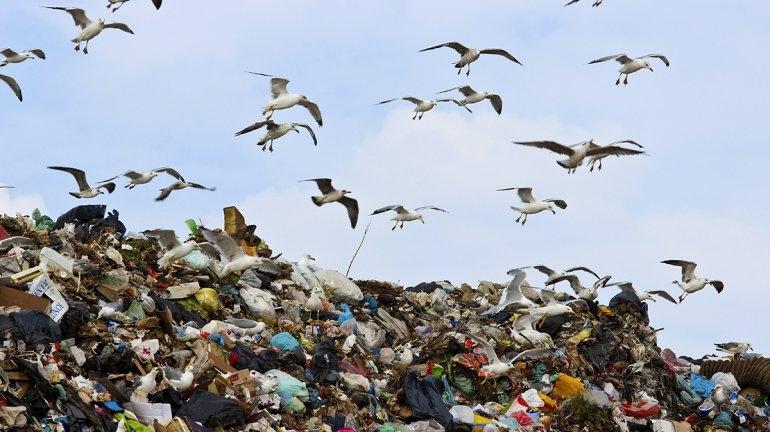 Bolsas de plástico no: los pequeños cambios de hábitos, son los que perduran en el tiempo