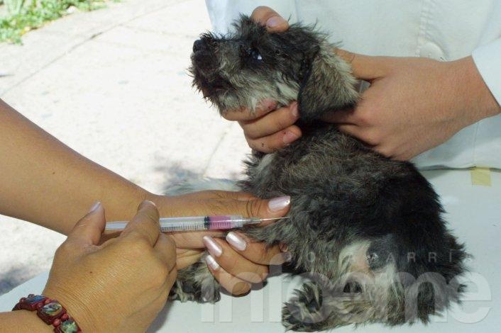 Últimas fechas de la campaña de vacunación antirrábica