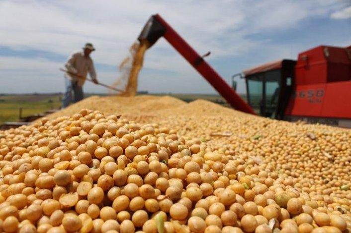 Desde el 11 de diciembre eliminan las retenciones al maíz, al trigo y a la carne