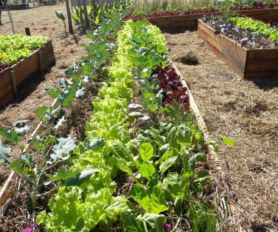 """Se realiza el taller """"Huerta agroecológica"""" en El Progreso"""