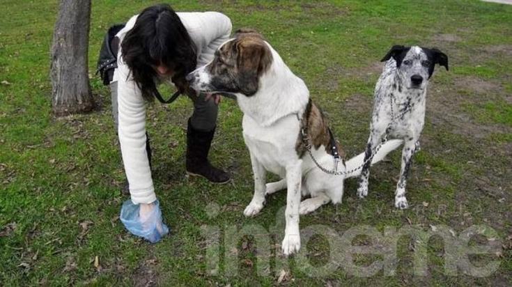 Colocarán bolsas biodegradables para excrementos de mascotas