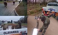 Informe de la Coordinación de Seguridad Rural