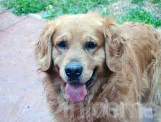 Buscan a un perro que se extravió en San Vicente