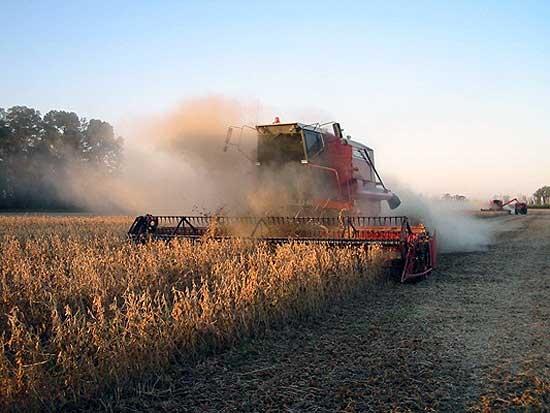 La falta de lluvia puede complicar la cosecha gruesa