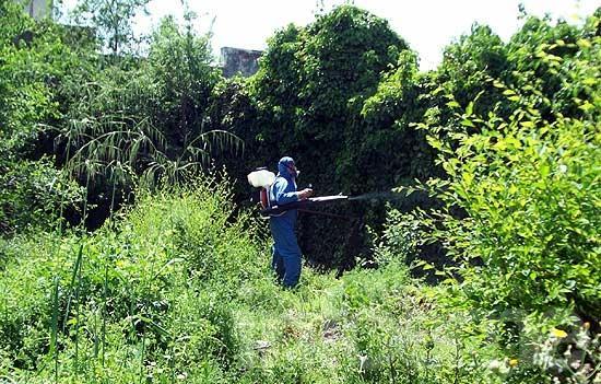 Prevención del Dengue: esta semana se realizarán fumigaciones en el Barrio Luján