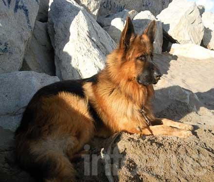 Perros perdidos y encontrados