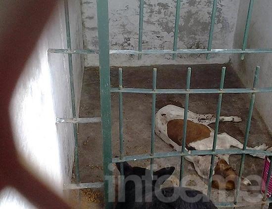 Perros lastimados y acusaciones cruzadas