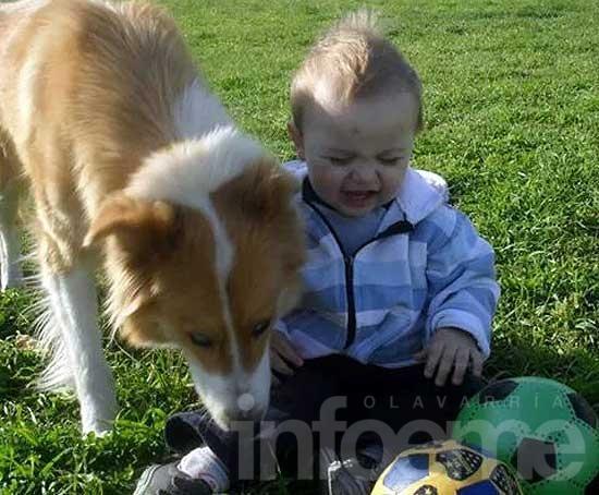 Buscan una perra que se perdió