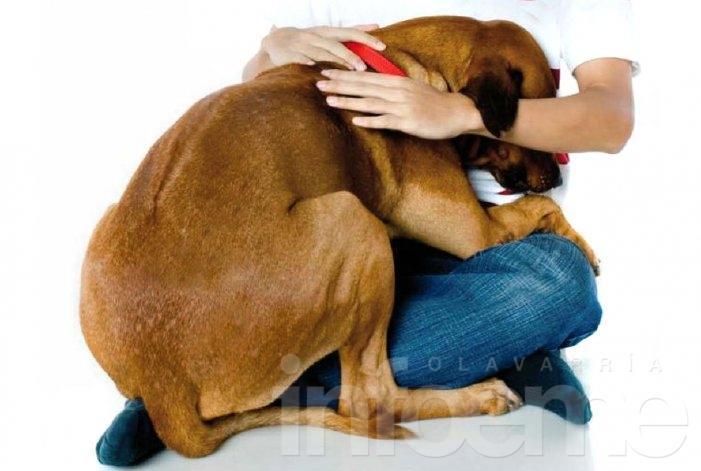 Consejos y un método efectivo para cuidar a las mascotas de la pirotecnia