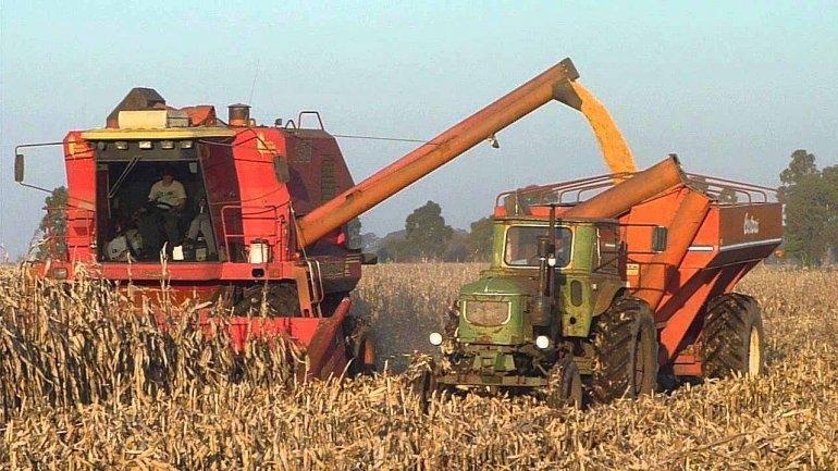 """El Gobierno asegura que """"será más negocio producir maíz"""" que soja"""