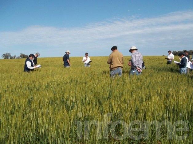 Los pequeños productores temen que las nuevas medidas no los incluyan, dijo Miotti