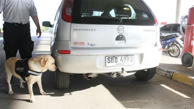 Querían ingresar dólares de manera ilegal: los detectó perro de AFIP