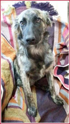4 cachorros rescatados buscan una familia con urgencia