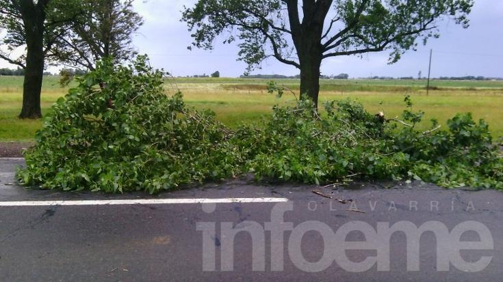 Se cayó un árbol sobre la Ruta 226