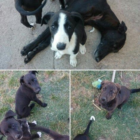 Ofrecen perros en adopción