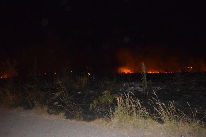 Noche atareada para Bomberos por incendios forestales
