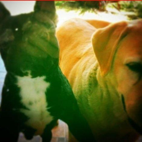 Buscan perro perdido en Loma Negra