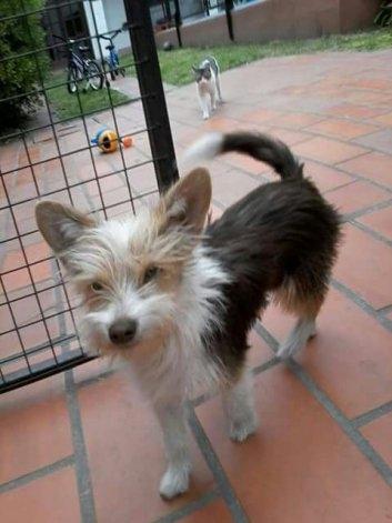 """Familia busca a su mascota """"Chicho"""""""