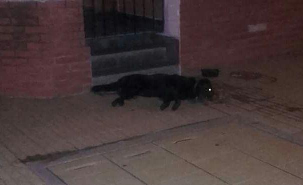 Lamentable: aparecieron varios perros envenenados en barrio Independencia