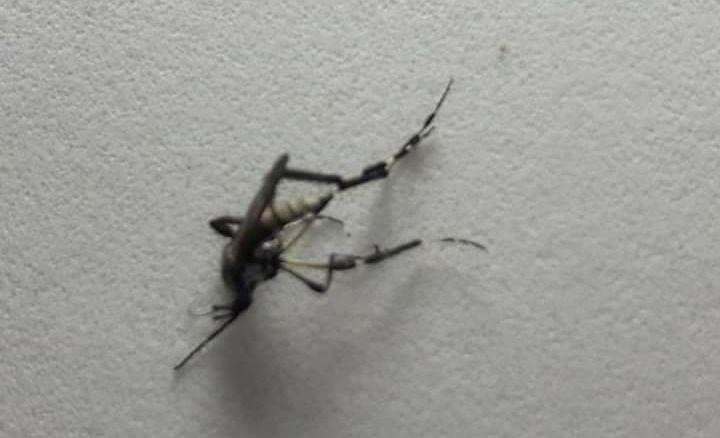 Informan sobre medidas de prevención ante la aparición de mosquitos