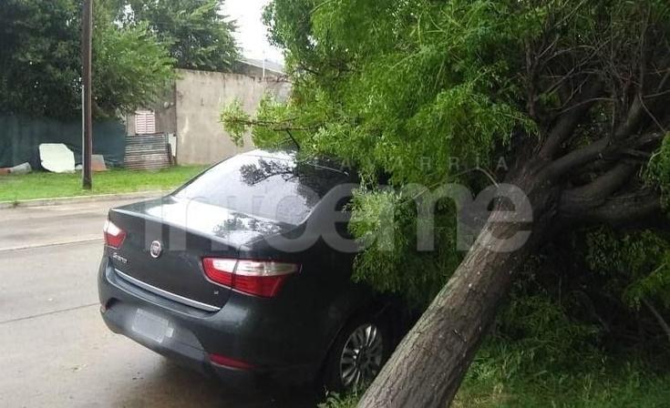 Un árbol cayó sobre un auto en Junín casi Colón