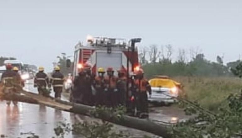 Tragedia en la Ruta 65: un árbol cayó sobre un auto y murió una nena