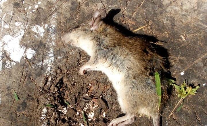 """Reclamos: """"Los terrenos son un asco, hay basura, ratones y murciélagos"""""""