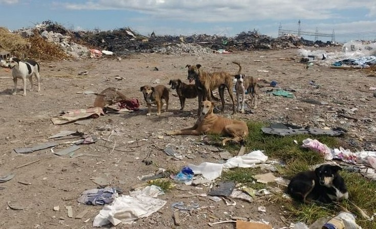 Animales abandonados: concejales recibirán a proteccionistas
