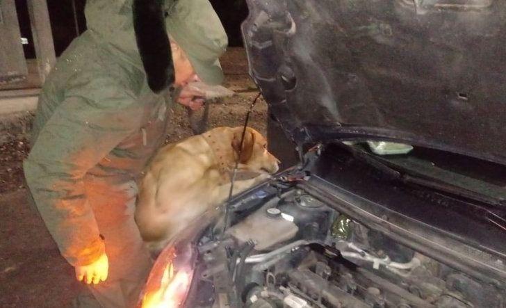 Olavarriense con marihuana en el auto: lo detectó un perro de Gendarmería