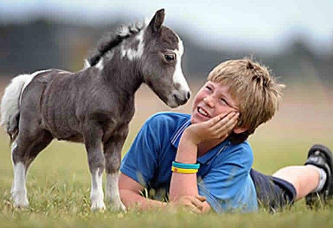 Los caballos más pequeños del mundo nacen en Olavarría