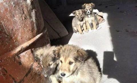 Dan cinco cachorros en adopción