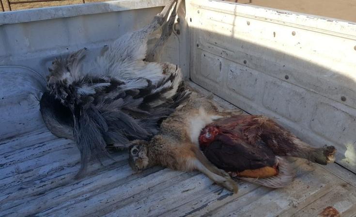 Multaron a galgueros que practicaban caza furtiva