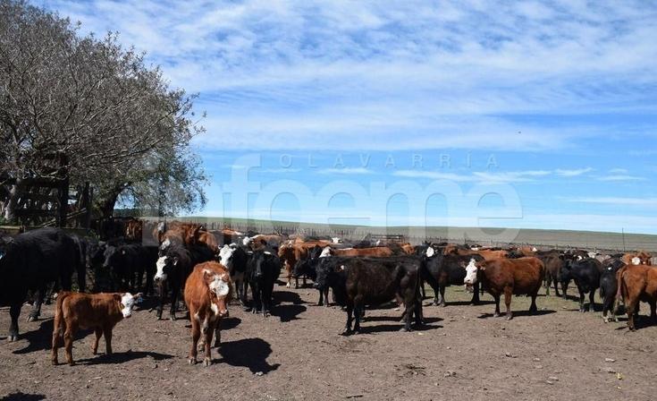 """Animales invasores: para el Ministerio """"no está acreditada"""" la propiedad"""
