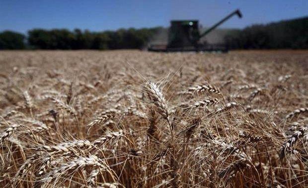 Provincia: elaborarán un mapa de la calidad del trigo